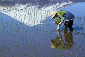 Landbouwprobleem ziet er heel anders uit in Japan