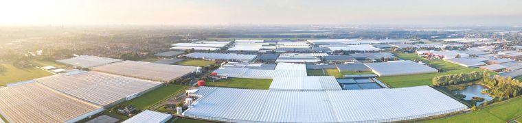 De plek van de Nederlandse agrosector op de internationale markt