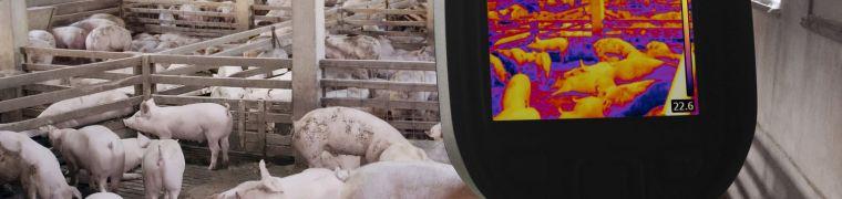 wereldvarkensmarkt