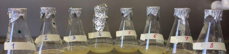 Kunnen we nieuwe infectieziekten voorspellen?