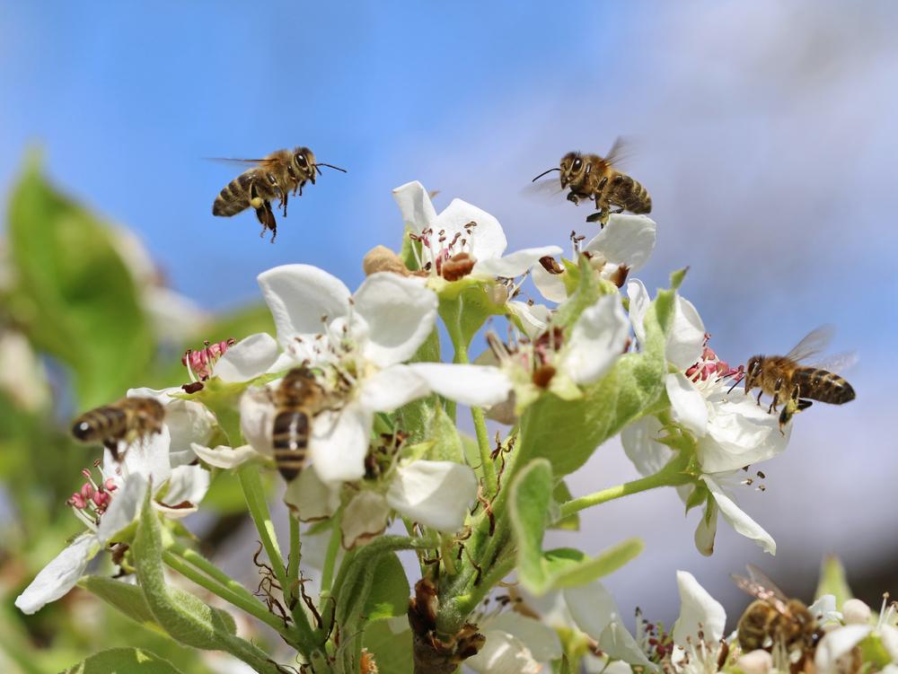 bijen rondom bloemen