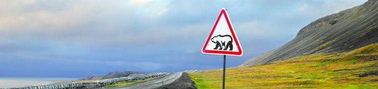 Ijsbeer waarschuwing in longyearbyen