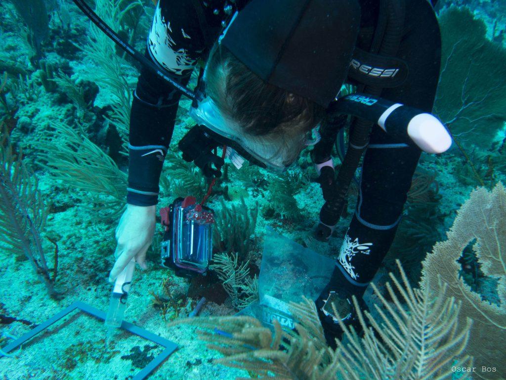 Lisa neemt een monster van cyanobacteriën (foto: Oscar Bos)