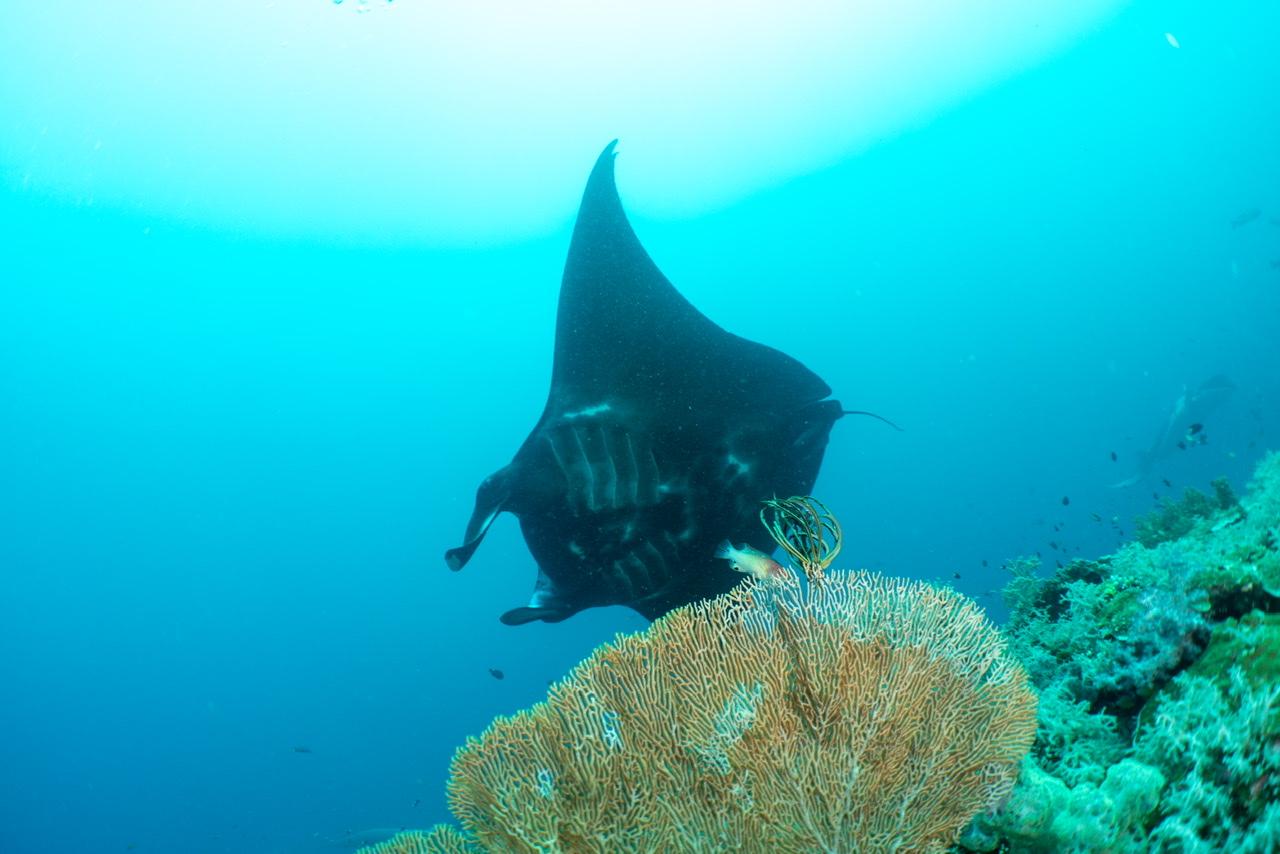 Schoonheidsstudio's onder water mantaroggen