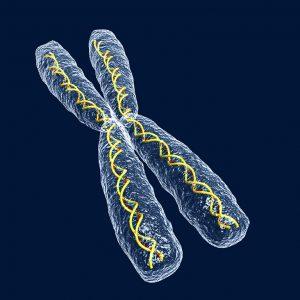 shutterstock_1221071_chromosoom_x_dna_genetica_gen_lr