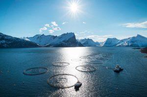 Norwegian Seafood Council © Johan Wildhagen, visproductie