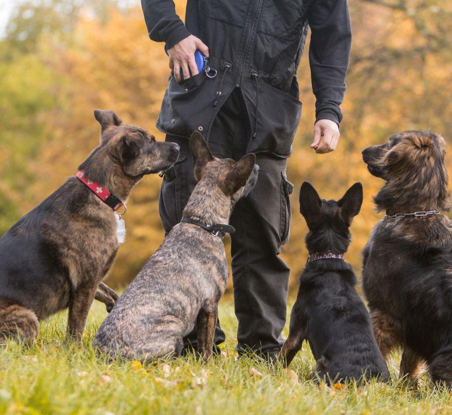 Minder hondenbeten - puzzelen naar veiligheid voor mens en dier