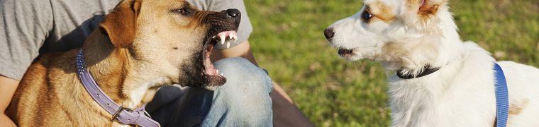 Bijtincidenten honden: liever chirurgische precisie dan alles over eén kam