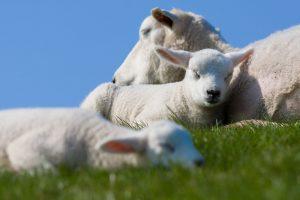 Dierenwelzijn vraagt om maatwerk en goede samenwerking