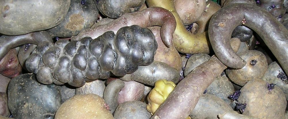Wilde varianten aardappelen