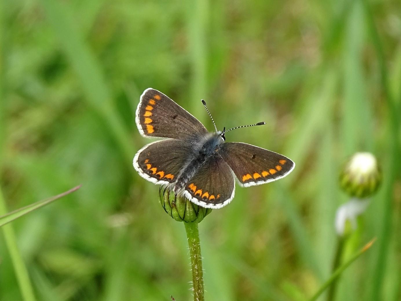 Vlinder biodiversiteit