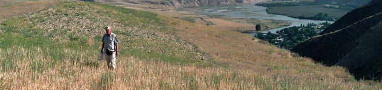 Wilde spinaziezaden verzamelen in Tadzjikistan