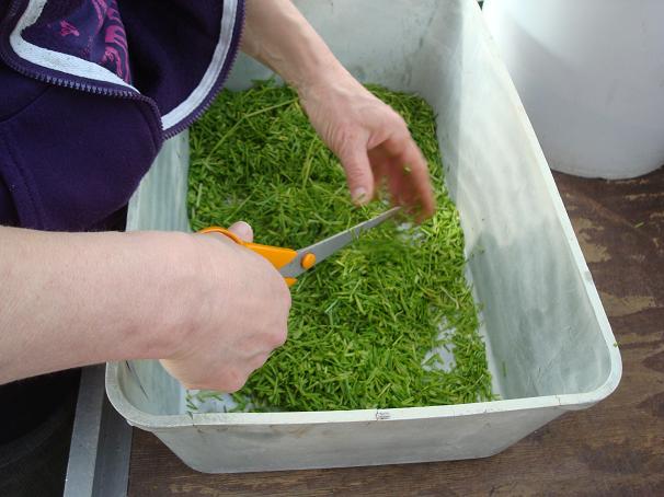 Joep die het gras in kleine stukjes knipt waarna het door de simulanten is gemengd.