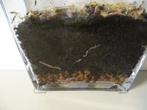 wormen aardse grond
