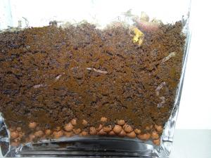 wormen op Marsgrond