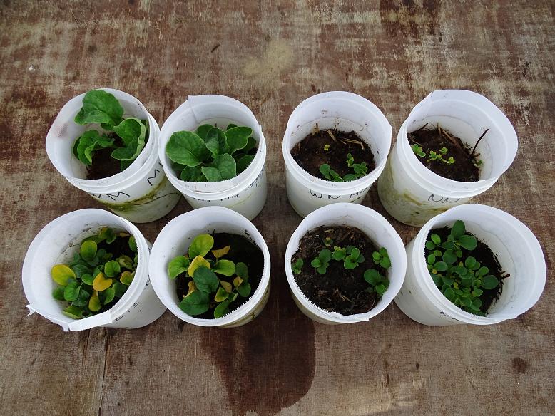 Overzicht potten uit wormen experiment - verschillende soorten voeding
