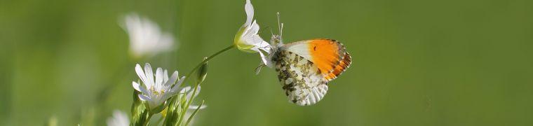 Werk maken van biodiversiteit