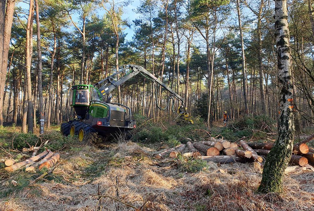 We oogsten hout uit onze bossen om allerlei producten van te maken