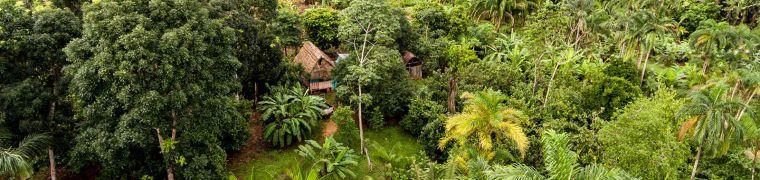 Tropische bossen als klimaatoplossing