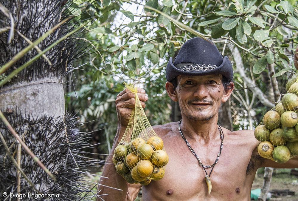 Vruchten van Astrocaryum aculeatum, een overheersende gedomesticeerde soort uit de Amazone, in een landelijk dorp in Itapiranga (c) Diogo Lagroteria