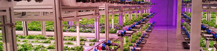 Verticale landbouw: groente telen in de stad
