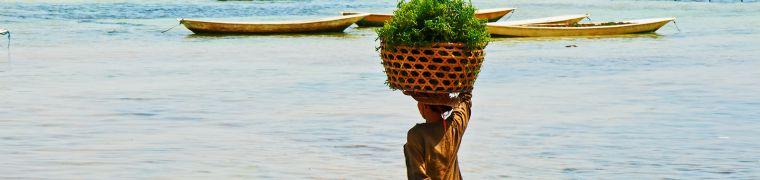 Zeewier als duurzame voedselbron