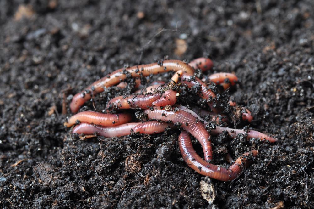 Regenworm boerderij van de Toekomst