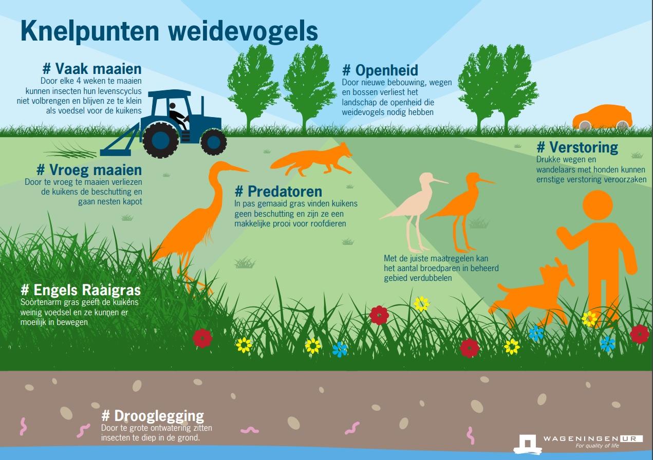infographic knelpunten weidevogels