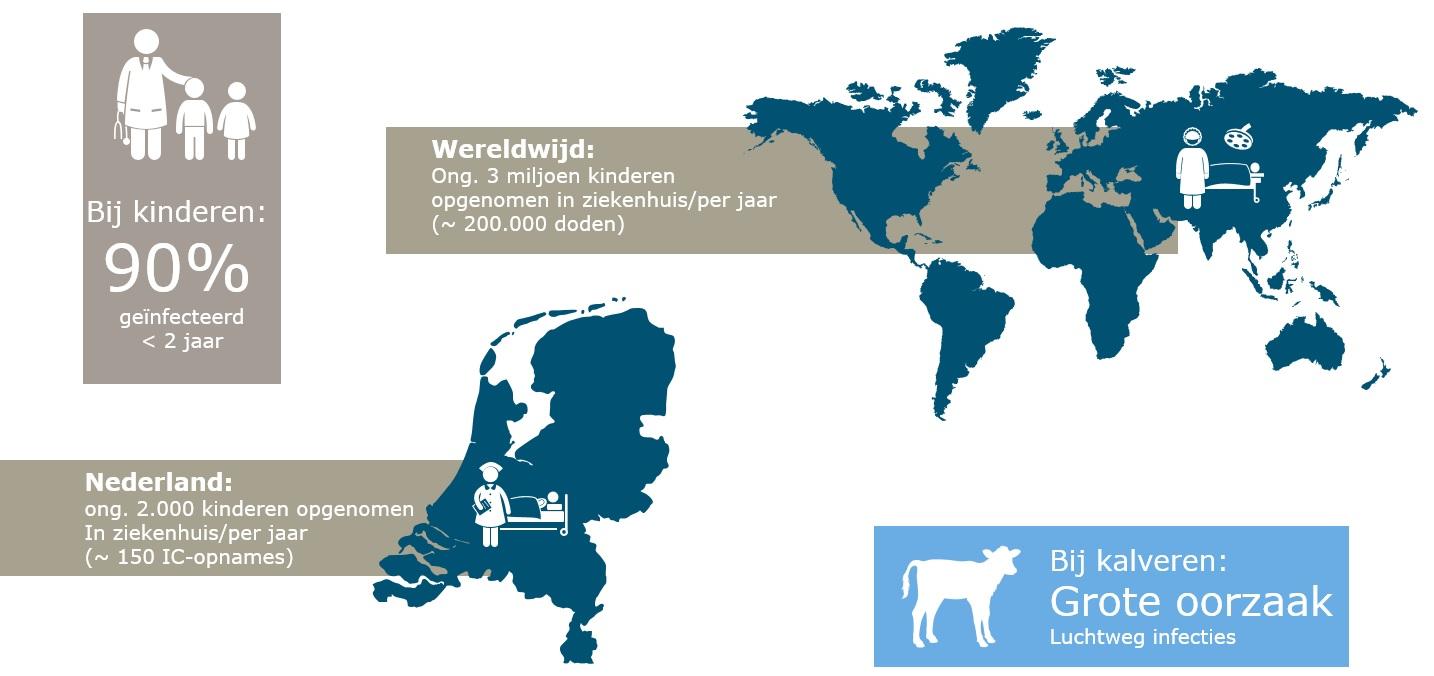 infographic: de impact van het RS-virus