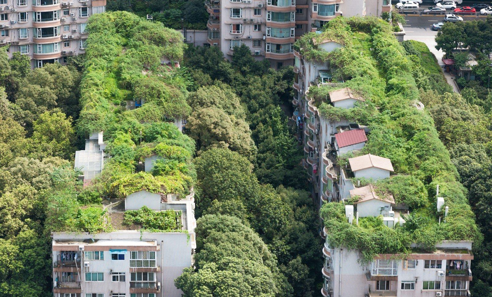 Beplanting op daken