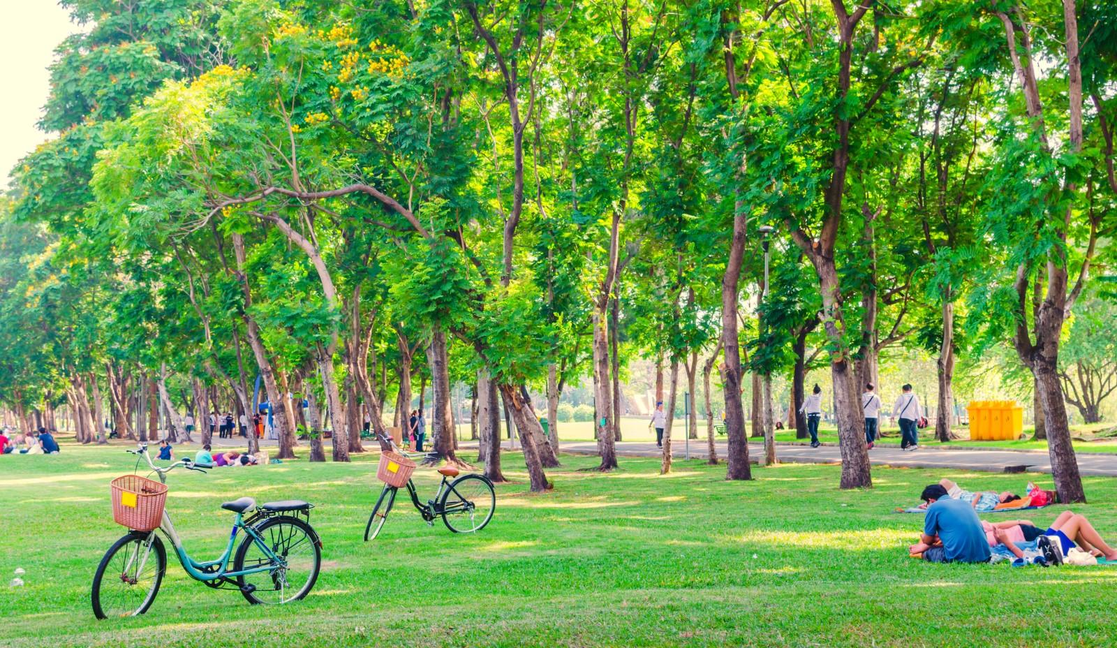 Park in de stad