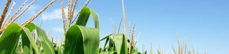 http://www.rvo.nl/onderwerpen/agrarisch-ondernemen/gemeenschappelijk-landbouwbeleid